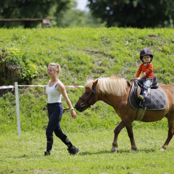 agrement cai si ponei